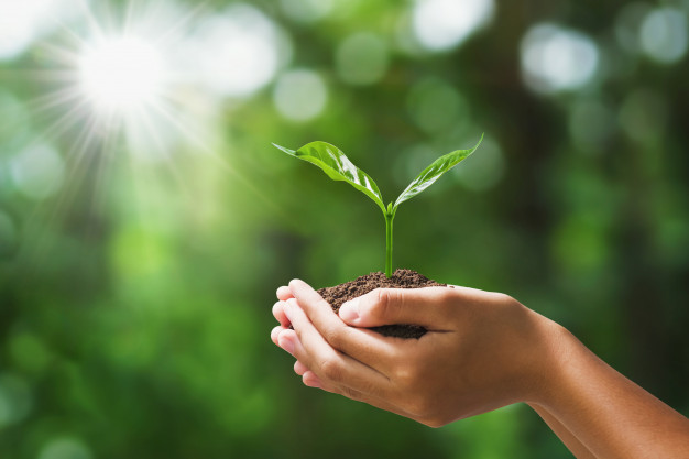día de la naturaleza sostenibilidad medioambiente jelos&guadalaviar