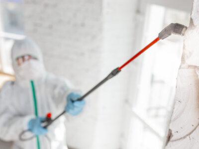 Empresa de control de plagas y fumigación valencia