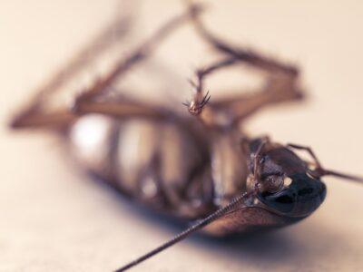 evitar y eliminar las cucarachas en verano control de plagas en valencia